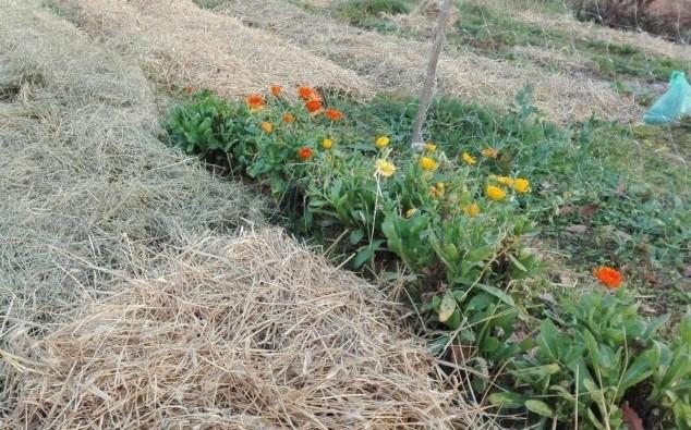 Malčiranje - održivi način tretiranja zemljišta