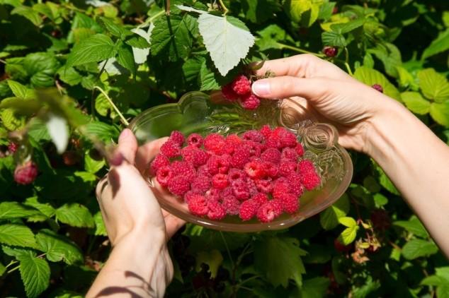 Prirodni načini zaštite voća od bolesti
