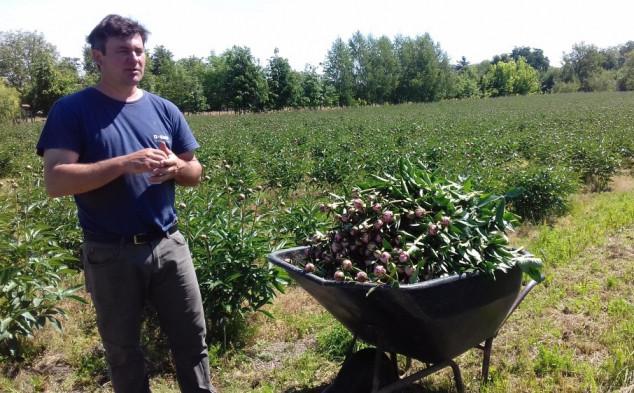 Prvi u Hrvatskoj uzgajaju božure i izvoze u Nizozemsku