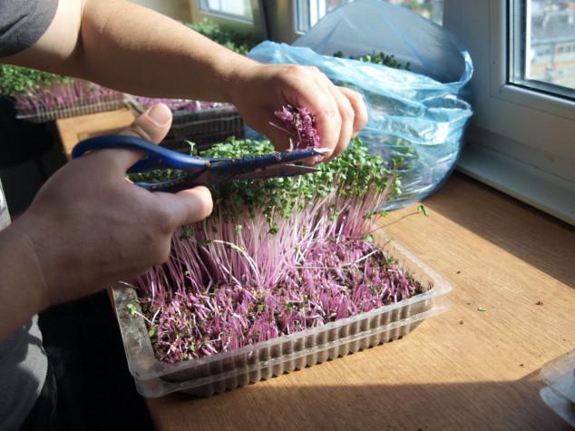 Mikropovrće je superpovrće i lako ga je proizvesti