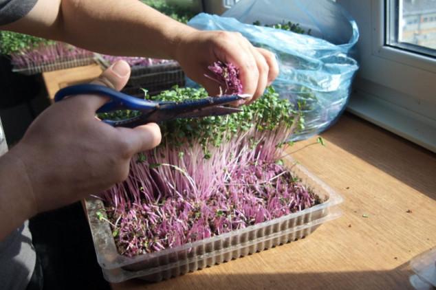 Mikropovrće - lako za proizvodnju