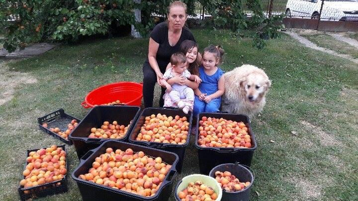 Skrbi o tri hektara voćnjaka i još sve doživljava kao hobi