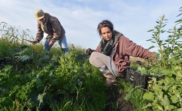 Mladim poljoprivrednicima duplo više novca za projekte ruralnog razvoja!