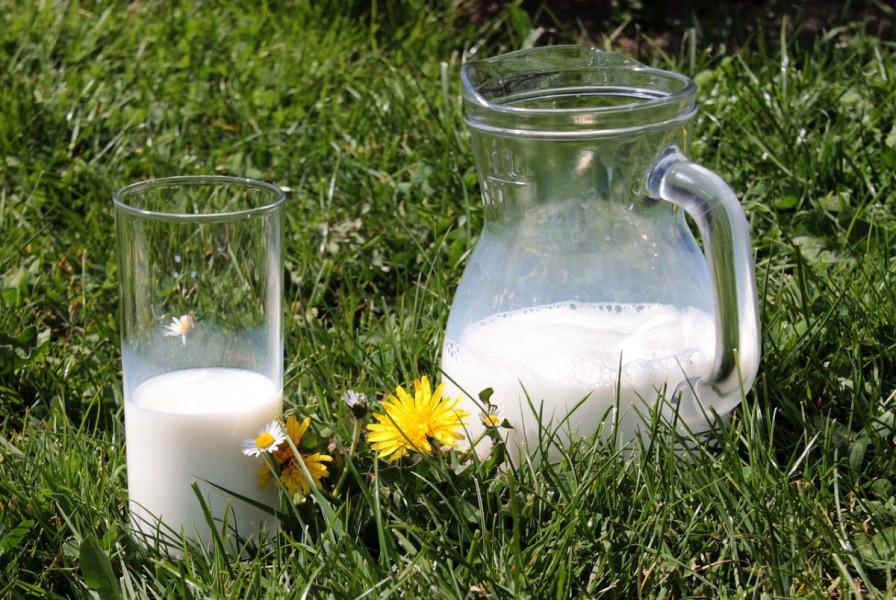 U svibnju prikupljeno nešto više mlijeka nego u travnju