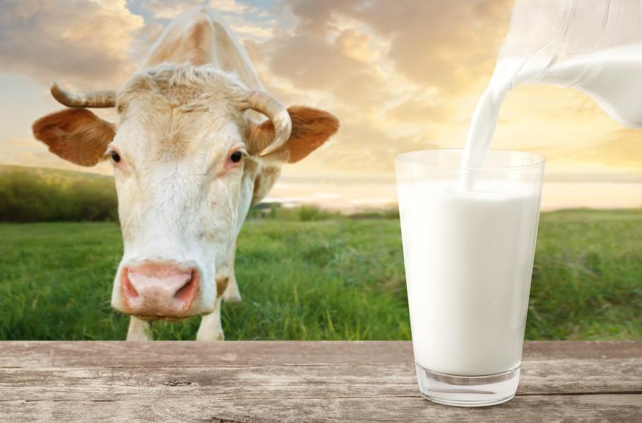 Cijene mlijeka - pozitivne, ali drugačije