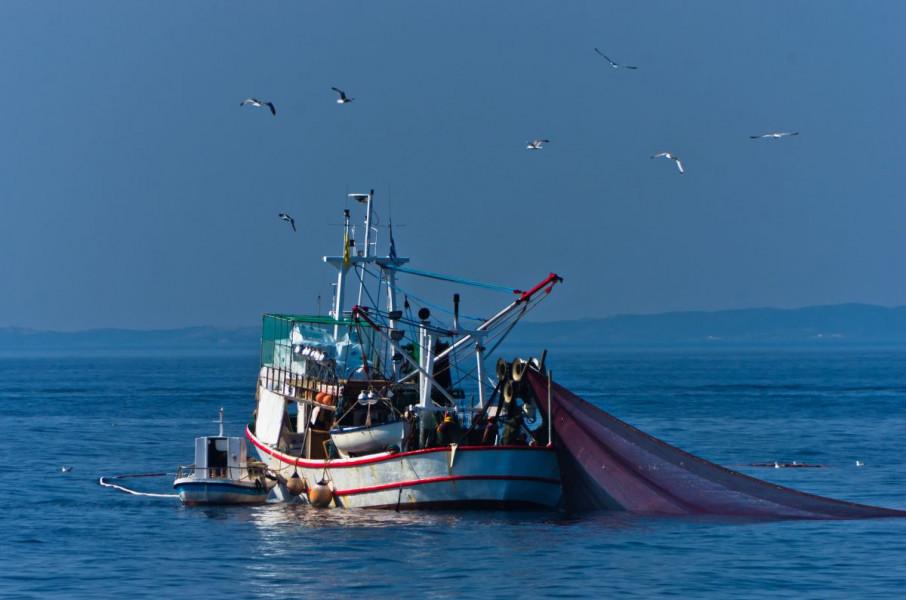 BiH ulazi u FAO komisiju za ribarstvo Mediterana?