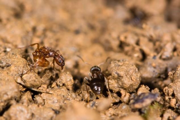 Kako se riješiti mrava u bašti na prirodan način