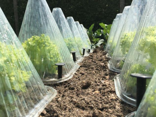 Kako zaštititi povrće od mraza?