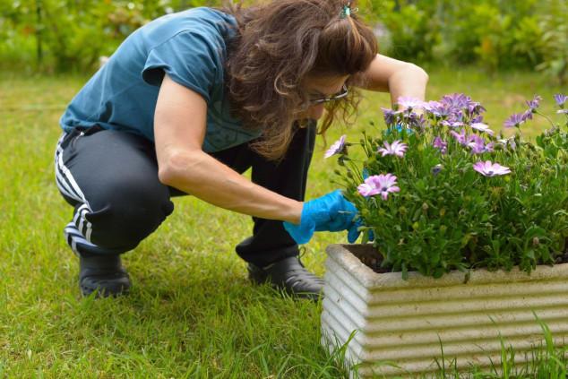 Kako se riješiti nametnika na ukrasnom bilju?