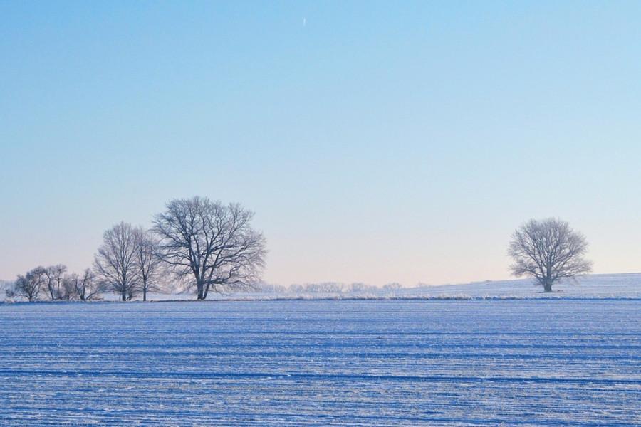 Pšenici odgovara sneg