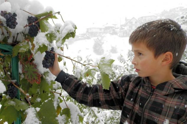 Oktobarski sneg lomio stabla voća
