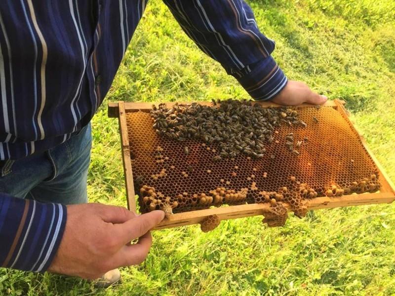 Ekološka zaštita pčelinjih zajednica