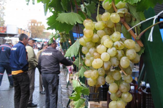 Oplenačka berba u slavu vina i grožđa