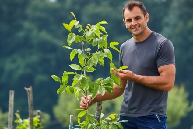 Ekološki uzgoj višegodišnjeg nasada oraha