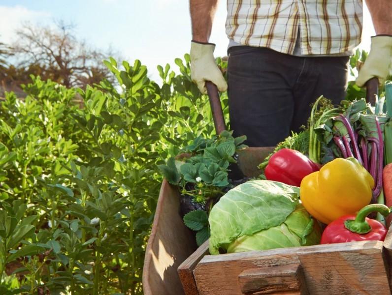 Sve više proizvođača organske hrane