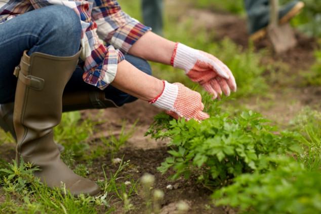 Kako zaštititi povrće bez kemije?