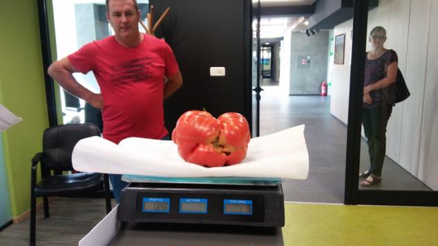 Uzgojili rajčicu od 1,8 kilograma!