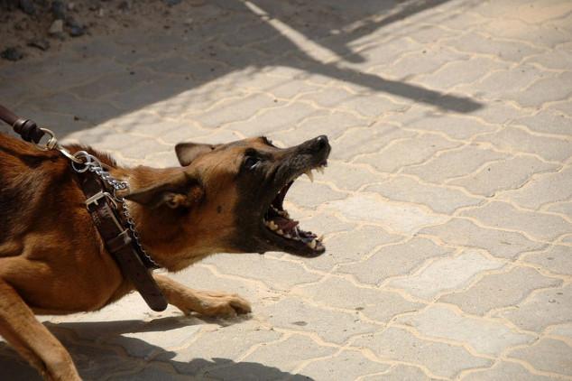 Razlozi pojave i sprečavanje agresije pasa