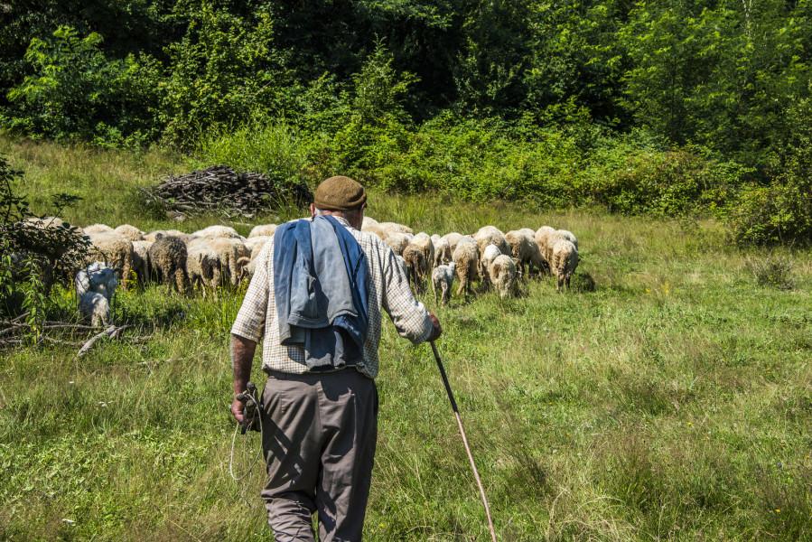 Popunjene kvote za pastire i stočare, gdje pronaći radnike?