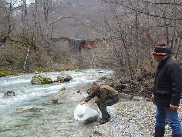 Pastrmkom poribljavaju Sutjesku, Hrčavku i Jabučnicu