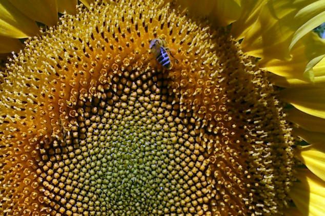 Pčelari najveći gubitnici klimatskih promena