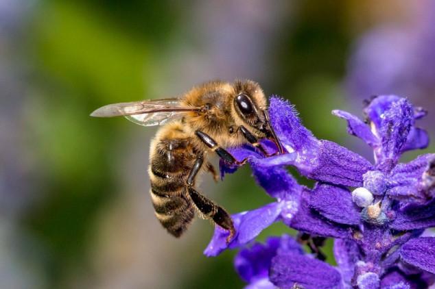 Predlog o zaštiti pčela