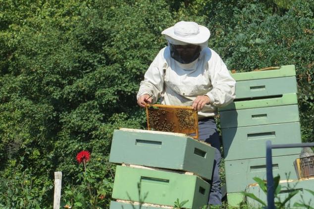 Pčelar koji ne voli med
