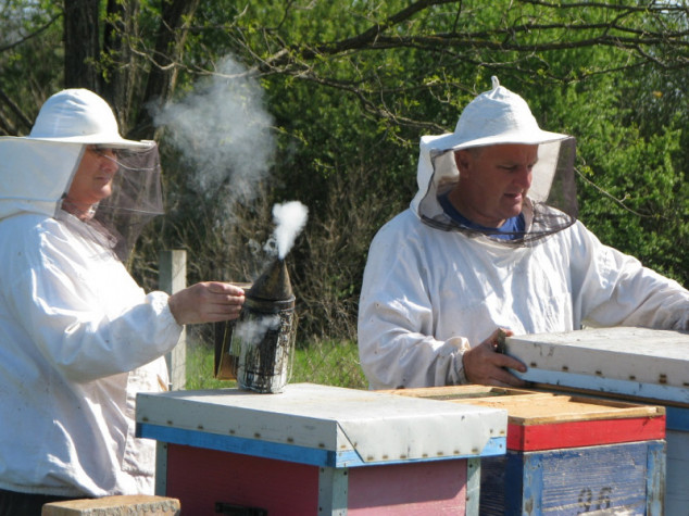 Godišnje proizvedu pet tona meda
