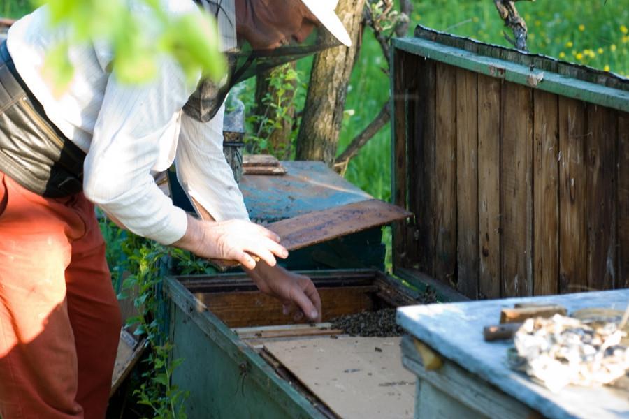 Otkada se bavimo pčelarstvom, lošiju godinu ne pamtimo!