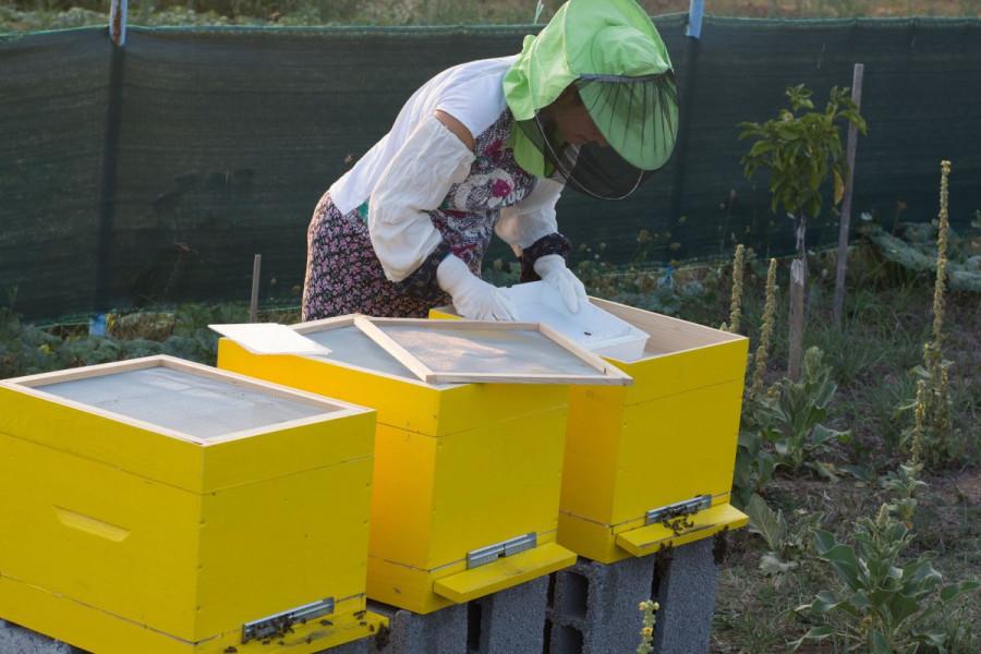 Pčelarica Sabaheta udaju pamti po ubodu pčele