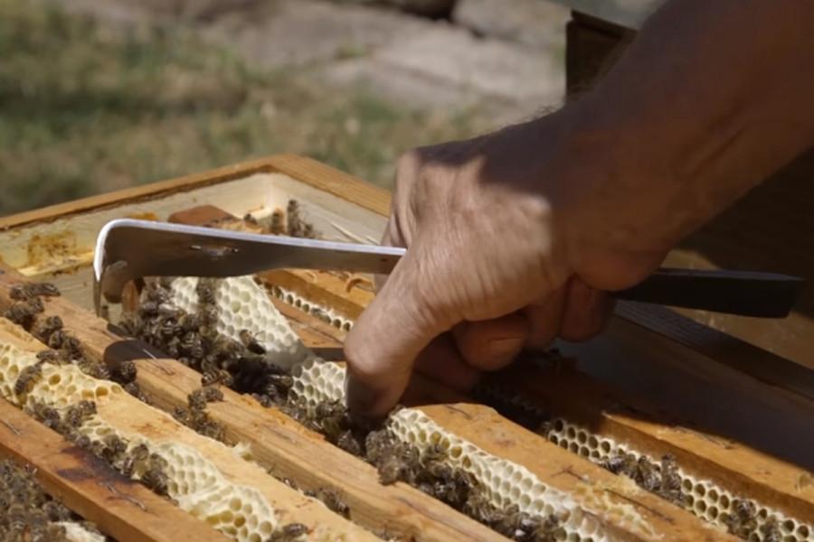 Sertifikacija lipovog meda