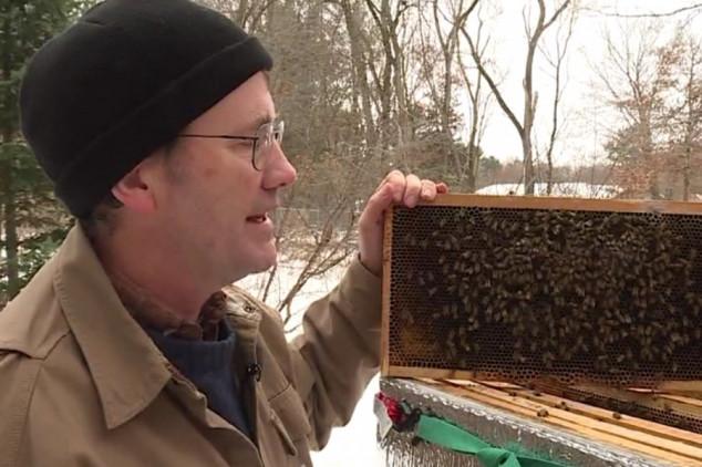 Otkrivena bakterija koja zimi ubija pčele?