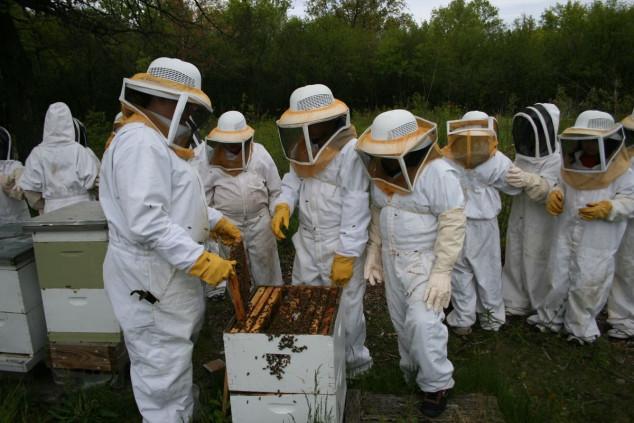 U EU manje pčelara, ali više košnica!