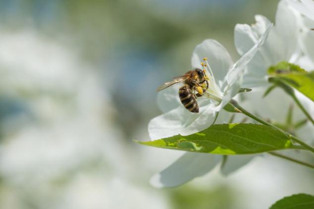 Pčele na vrhu hotela - domaći med na meniju