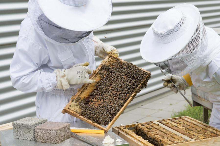 Javni natječaj - primijenjeno istraživanje u pčelarstvu