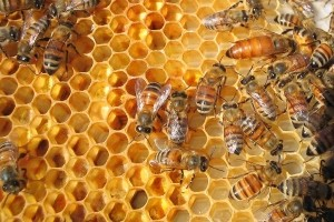 Sustav potpore pčelarstvu