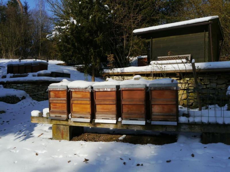 Kakav je utjecaj jake zime na pčelinje zajednice?