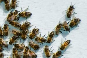 Imamo premalo ekoloških pčelara
