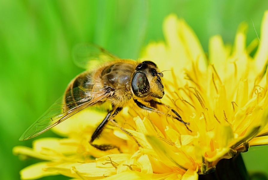 Pčelama je potrebna voda - napojite ih