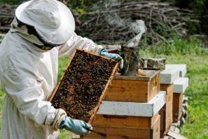 Nikad veći interes za Pčelarsku školu u Osijeku