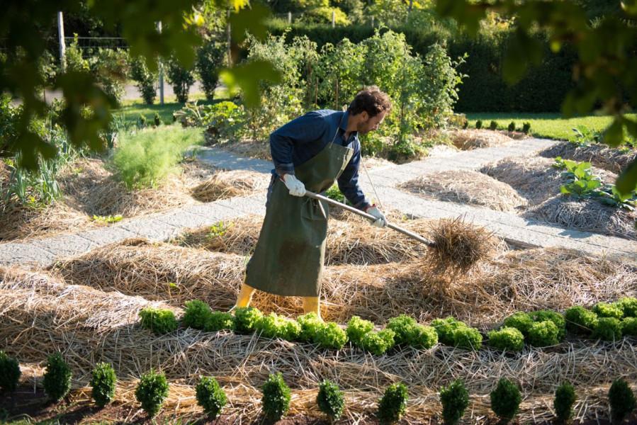 Posebnosti organske i permakulturne bašte