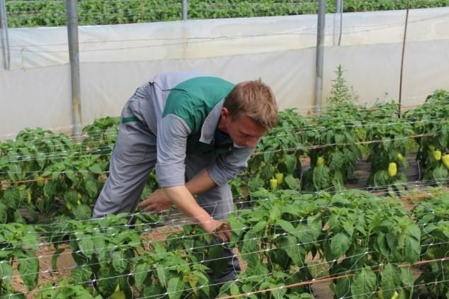 Folijarnom prihranom do zdravog povrća!