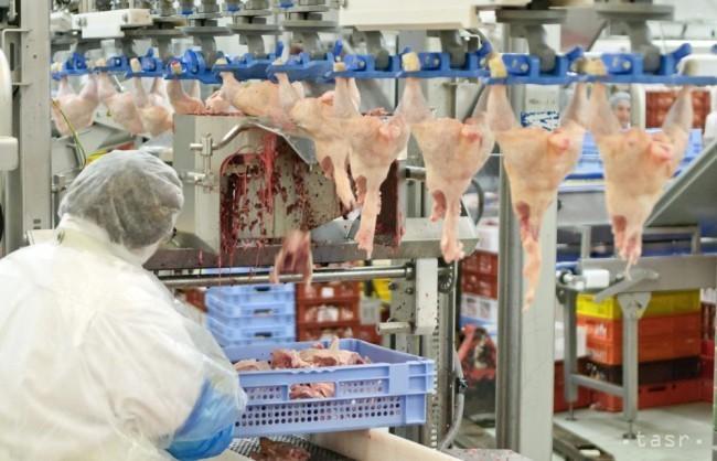 Salmonela u piletini slovačke tvrtke