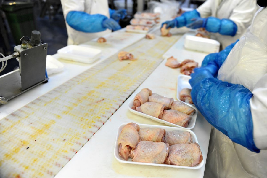 Preventivna kontrola piletine na salmonelu