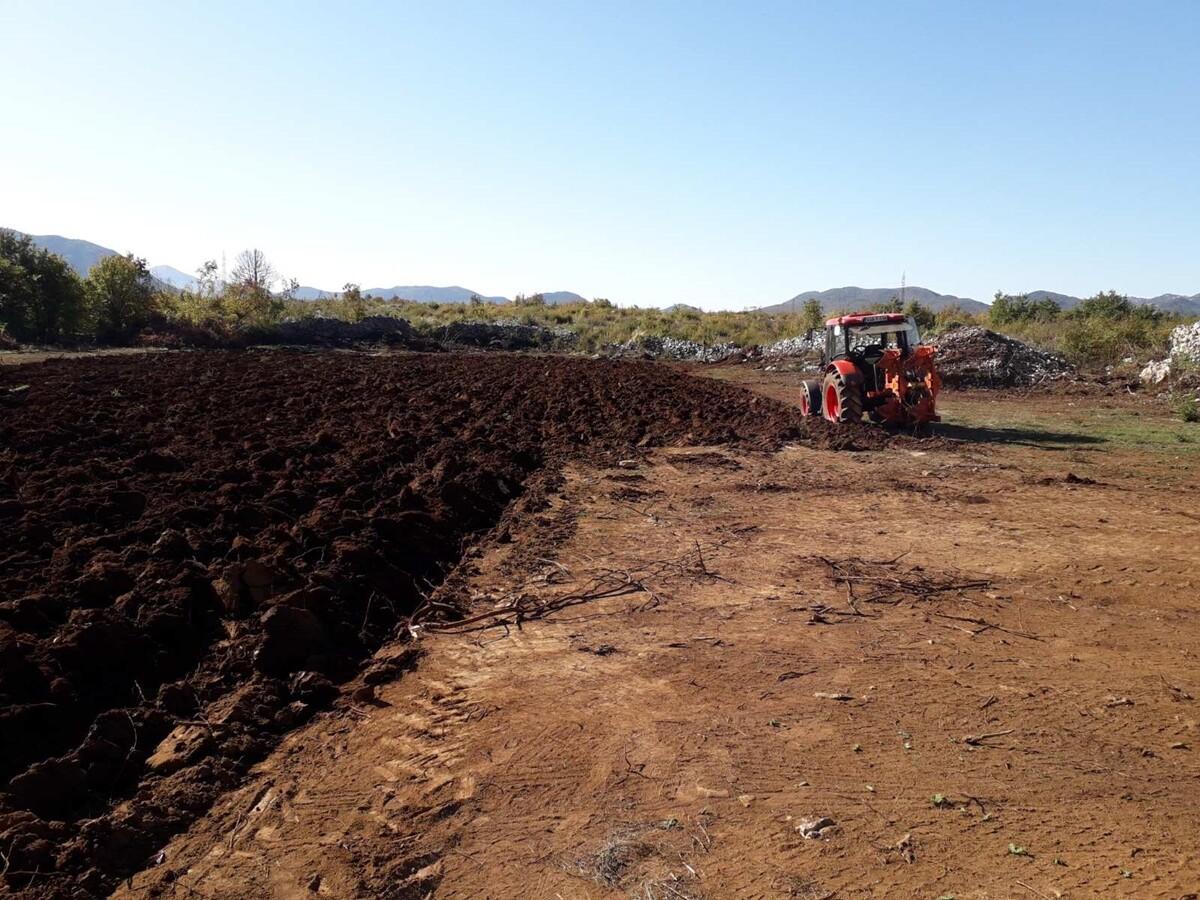 Uskoro realizacija projekta podizanja plantaže smokve ...