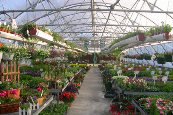 Organska proizvodnja osvaja Dalmatinsko zaleđe