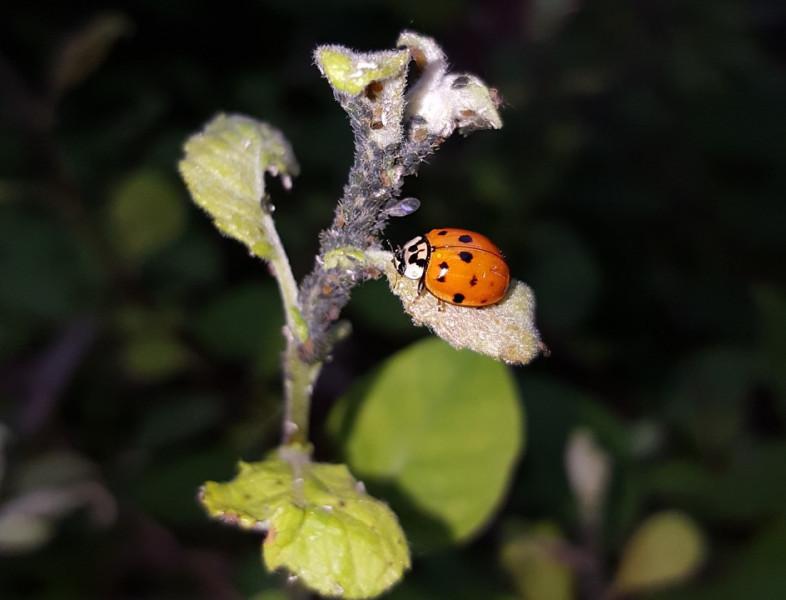 Zaštitite bilje i sebe potpuno prirodnim metodama