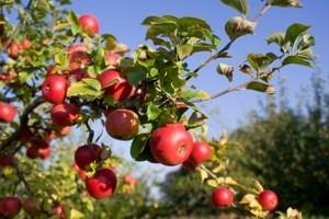 Biološka zaštita voćaka u integriranoj i ekološkoj proizvodnji
