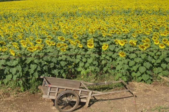 Poljoprivredni poticaji za 2010.