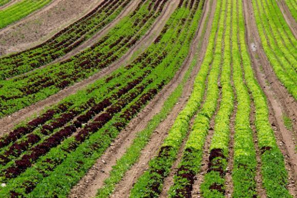 Potencijal za razvoj ekološke poljoprivrede